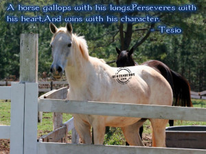 horse quotes fridge magnets horse quotes refrigerator magnets