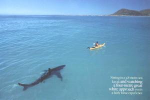 Shark Attack 3: Megalodon ~ John Barrowman, Jenny McShane, Ryan ...