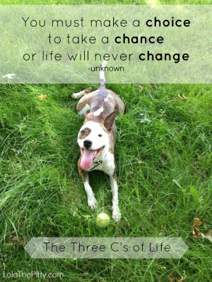 Ways to Advocate for Pit Bulls: October is Pit Bull Awareness Month
