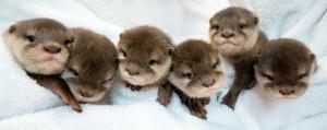 New Story: Otters updates around the world