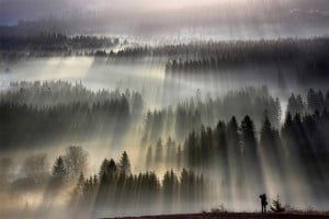 Forests Drenched in Light and Fog by Boguslaw Strempel by Christopher ...