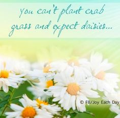Daisies Daisy Love You Quote Quotes Inspiring