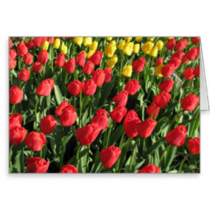 Tulips With Quotes And Sayings Cards & More