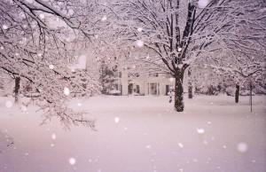 snow, trees, white, winter, wonderland