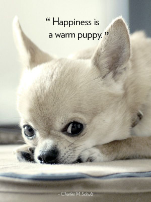 16 Dog Quotes That Will Melt Your Heart