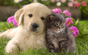 ... cute cat and dog cuddling | HD cats and dogs wallpapers - backgrounds