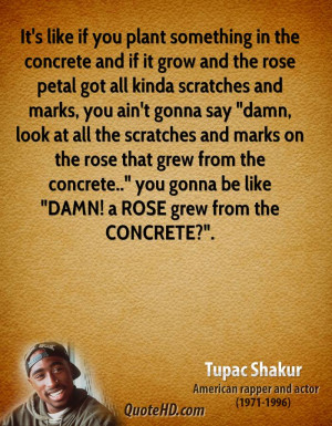 ... rose that grew from the concrete..