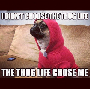 Funny Thug Quotes