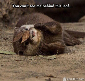 The post Cute Otter is playing hide and seek appeared first on Funny ...