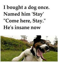 ... insane now. Via FB/Shut Up I'm Still Talking #quotes #funny #giggles