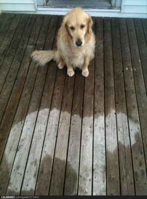 funny pictures, dog fell asleep in the rain