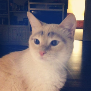 The Cat With Eyebrows.