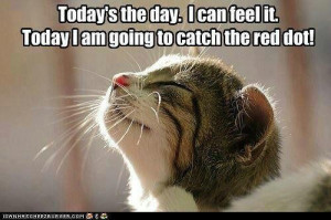 believe every day my cats think this will happen...