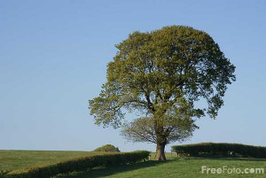 Picture of Tree in a field of green grass - Free Pictures - FreeFoto ...