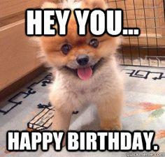 meme animal birthday meme animal birthday meme animal birthday meme ...
