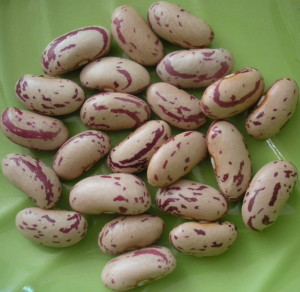 Crop 2013 Sugar Beans or Pinto Beans or Light Speckled Kidney Beans