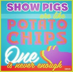 livestock showing quotes showing pigs goin showin show pigs quotes