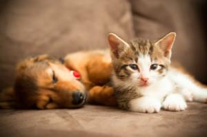 Puppy_and_Kitten.jpg