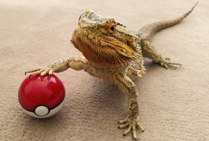 ... Photographs Document The Funny Antics Of An Expressive Bearded Dragon