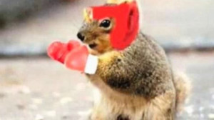 Funny Squirrel (29)