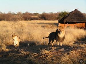 Tucano Viaggi: estate in Namibia, quote a partire da € 2.990