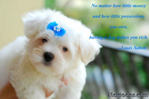 ... Quotes about Dogs: Cute Chow Chow Puppy With Inspirational Dog Quote