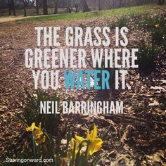 The #grass is greener where you water it #lawncare More