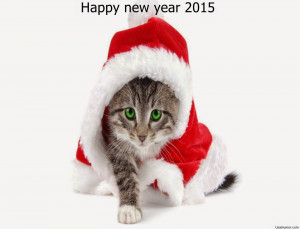 Happy New Year 2015 Funny wallpaper messages quotes wishes images ...