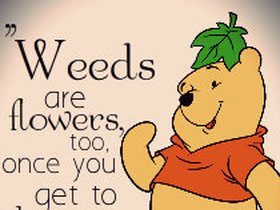 Winnie The Pooh Funny Pictures