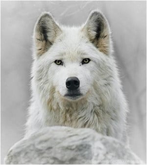 Furry and white and beautiful
