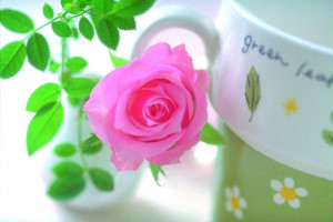 ... of love rose flowers post. Please come again for Flower Mounds updates