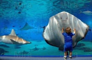 aquarium, child, feeling, funny, smile, sting ray, water