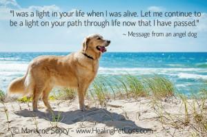 Loss Quotes, Best Friends, Rainbows Bridges, Golden Retrievers, Dogs ...