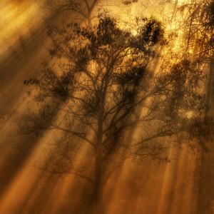 Autumn Morning Photography – Inspiring Words
