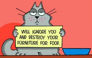 Кошки - удивительные животные, потому ...