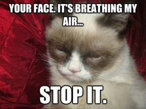 """There are more funny grumpy cat memes for you to browse. Use """"Next ..."""