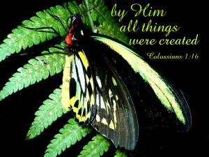 butterflies bible verses