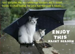 funny rainy cats funny rainy cats