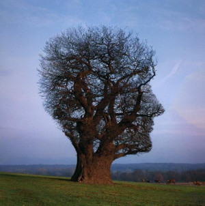 Tree, head shape, neurones mindfulness = brain training, re-