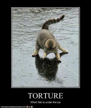 Funny cat pictures: Torture = when fish are under the ice