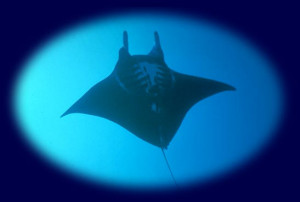 Marine organisms do not care about international boundaries; they ...