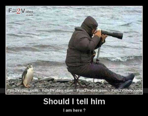 funny goodnight penguin photography goodnight funny quotes