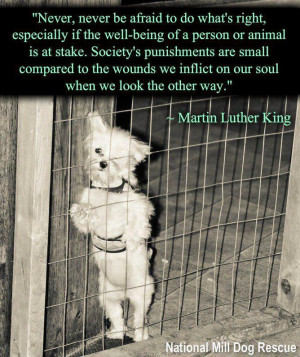 Martin Luther King / Welfare Compassion Animal Quote