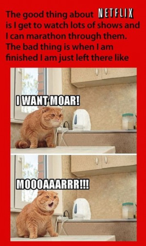 funny-pictures-cat-netflix