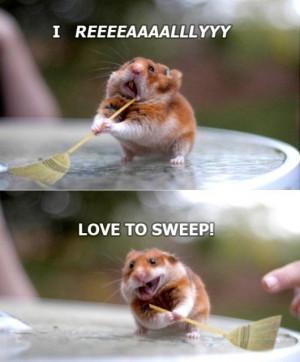 funny-hamster-loves-to-sweep.jpg