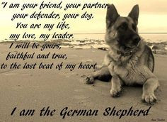 Funny German Shepherds
