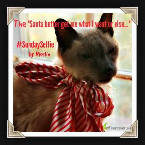 Santa Sunday Selfies, 2015 Cat Calendars and Book Winners