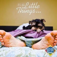 The little things: The moment when your pet wakes you up in the ...