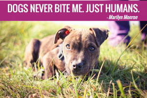 ... 25 famous dog quotes about what makes dogs wonderful and so beloved