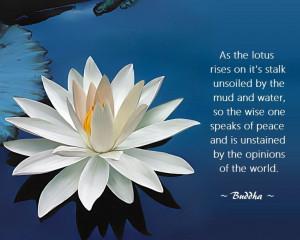 Buddhist quote..lotus